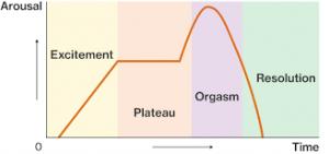 orgasm stages